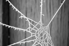 World Winter Web
